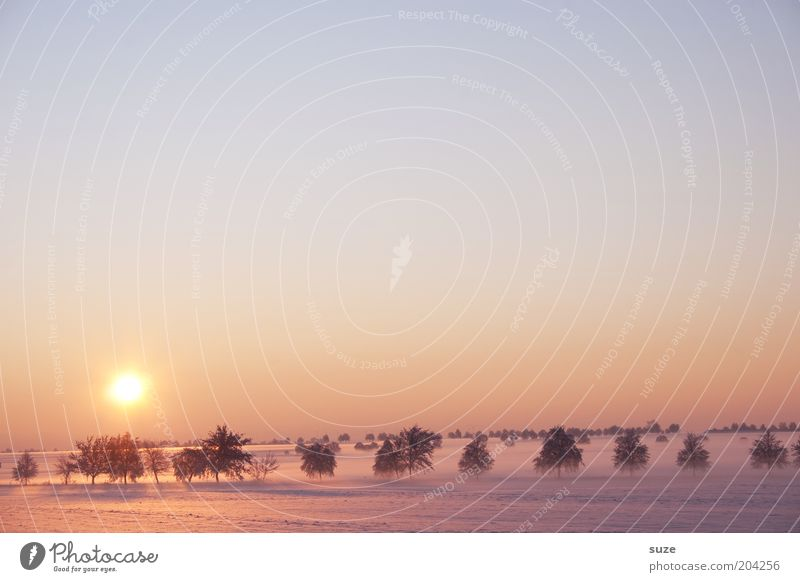 Sky Nature Tree Sun Loneliness Winter Landscape Environment Cold Snow Horizon Exceptional Field Climate Fog Esthetic