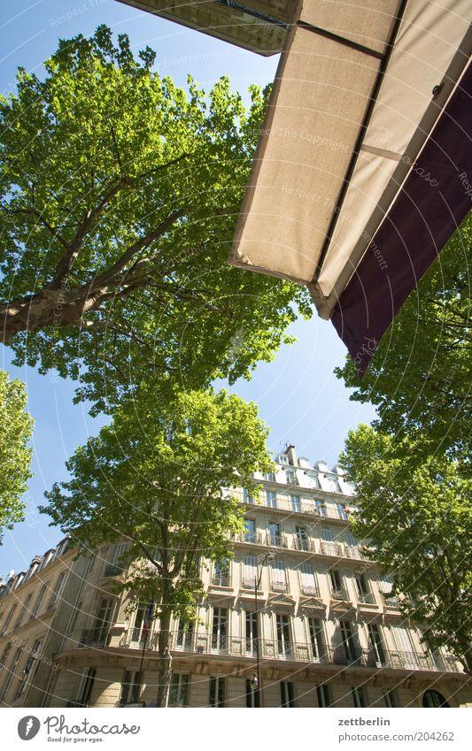 Bd St-Germain France Paris Capital city Avenue House (Residential Structure) Facade Window Glazed facade Architecture Town Sun blind Café Sidewalk café Tree
