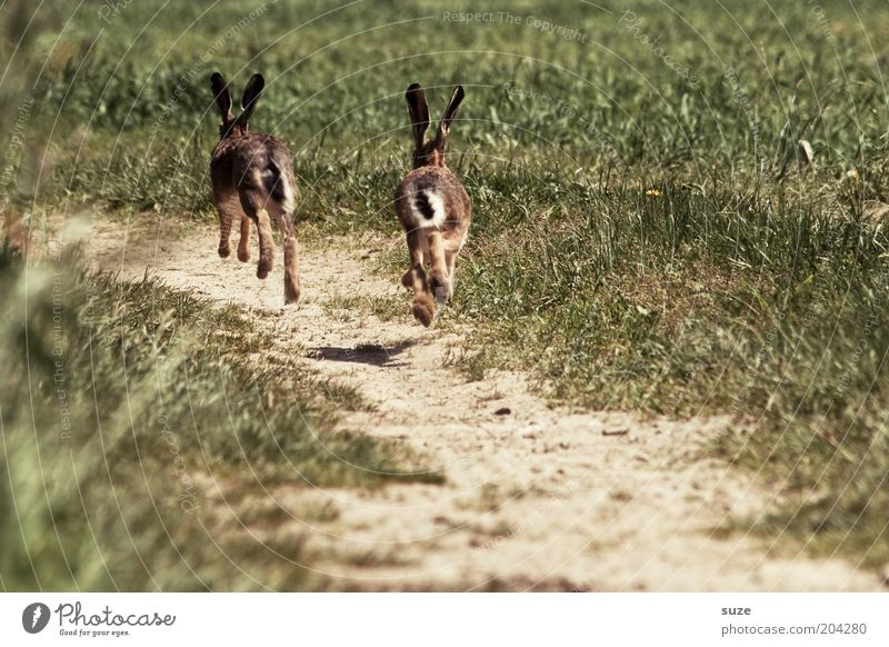 Nature Summer Plant Animal Environment Landscape Meadow Playing Grass Lanes & trails Earth Field Fear Wild animal Pair of animals