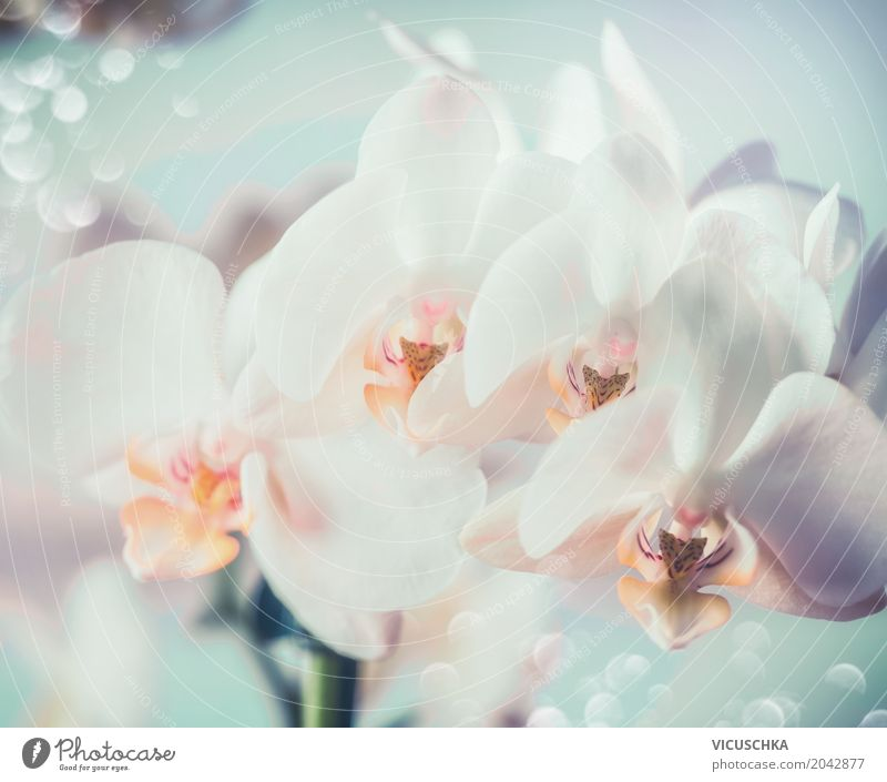 White Orchids Elegant Design Nature Plant Flower Blossom Bouquet Blossoming Orchid blossom Close-up Colour photo Macro (Extreme close-up)
