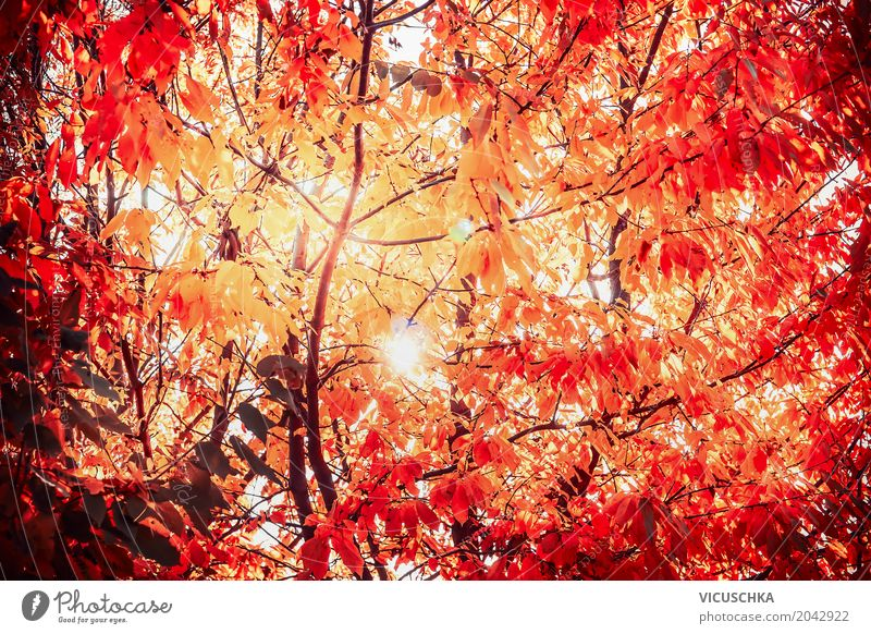 Sunny autumn leaves Vacation & Travel Nature Sunlight Autumn Beautiful weather Plant Tree Leaf Garden Park Forest Yellow Design Red Deciduous tree October
