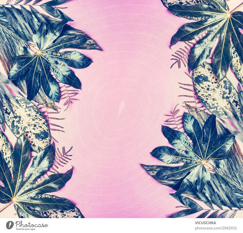 Tropical leaves frame on pastel pink background Lifestyle Style Design Leisure and hobbies Vacation & Travel Summer Nature Plant Leaf Foliage plant