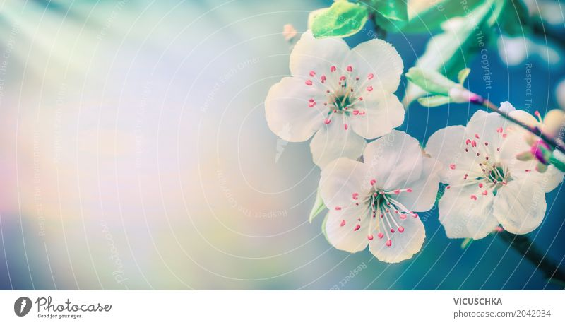 Nature Plant Blue Summer White Leaf Lifestyle Blossom Background picture Spring Style Garden Pink Design Park Blossoming