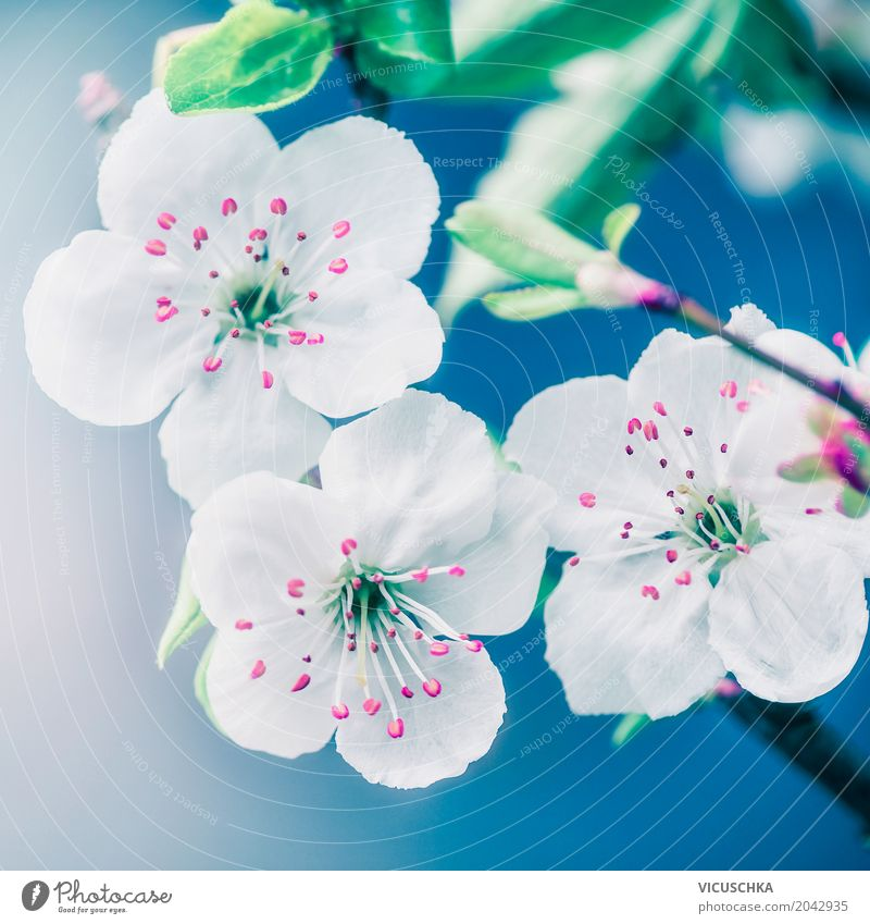 Nature Plant Blue Summer White Flower Leaf Blossom Spring Style Garden Design Pink Park Beautiful weather Blossoming