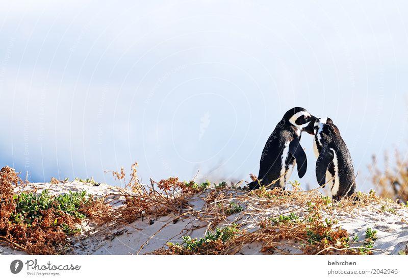 Pair dancing. Vacation & Travel Tourism Trip Adventure Far-off places Freedom Coast Beach Bay Ocean Wild animal Bird Web-footed birds Penguin Pair of animals