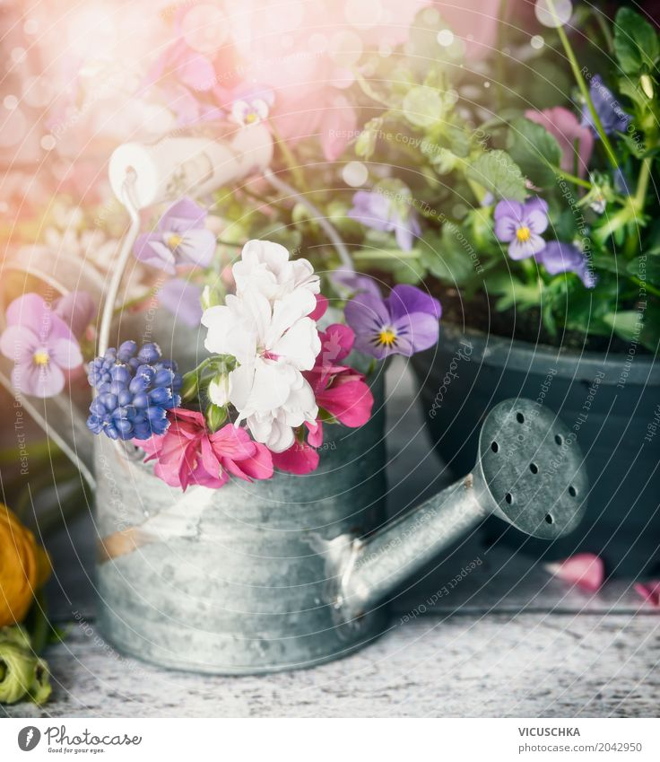 Watering can with plants and flowers on a garden table Style Design Leisure and hobbies Summer Garden Decoration Nature Plant Spring Flower Leaf Blossom Bouquet