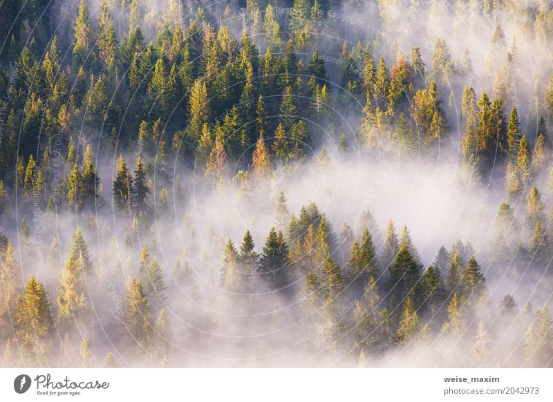 Coniferous forest in fog, Misty pine woodland Nature Vacation & Travel Plant Summer Green White Tree Landscape Clouds Far-off places Forest Mountain Spring