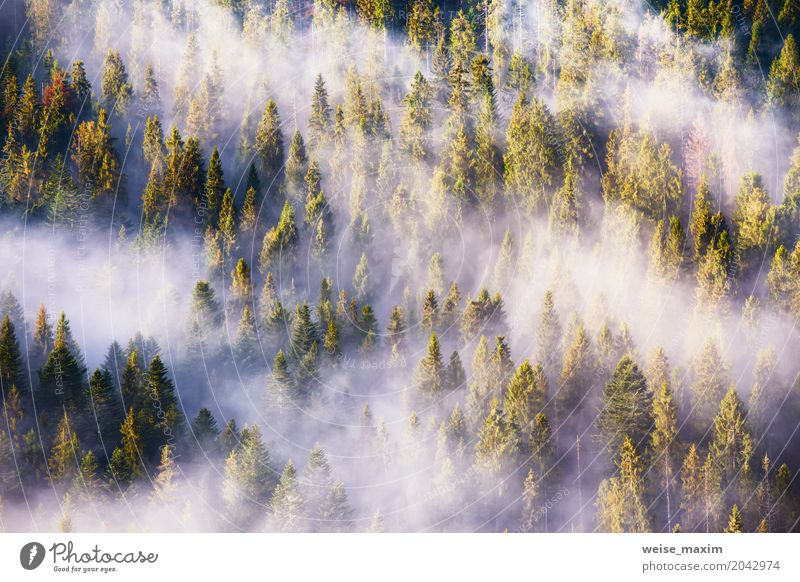 Landscape with beautiful fog in coniferous forest Design Vacation & Travel Summer Mountain Decoration Wallpaper Nature Plant Clouds Sunrise Sunset Sunlight