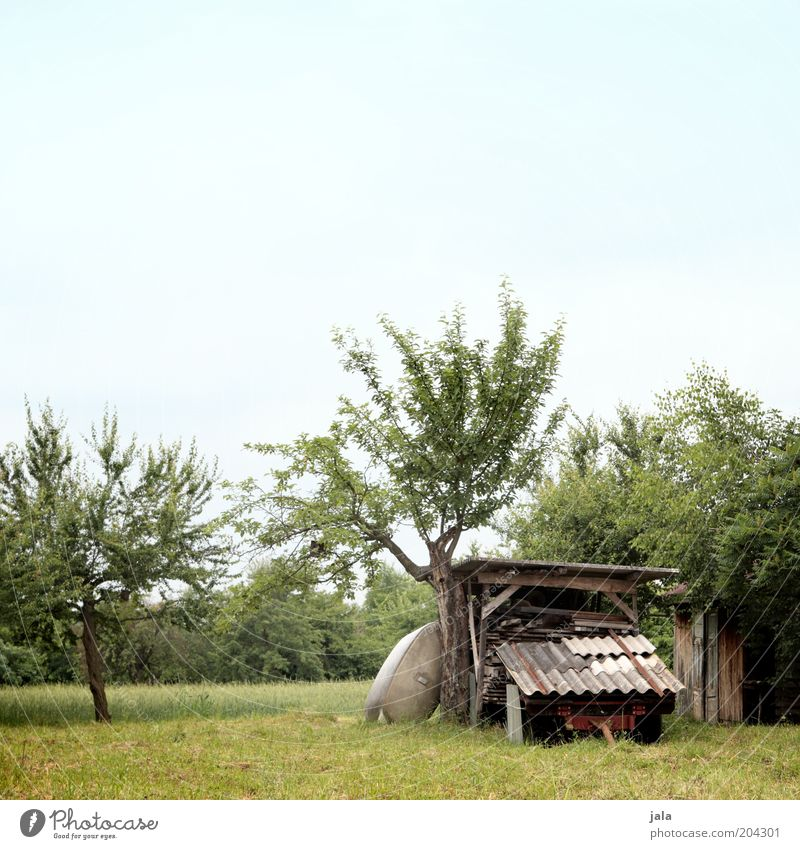 Nature Sky Tree Green Blue Plant Meadow Grass Garden Wood Field Hut Manmade structures Trailer Fruit trees