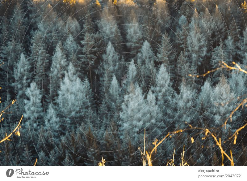 freezing cold Harmonious Trip Winter Nature Beautiful weather Tree Forest Bavaria Germany Deserted Wood Observe Discover Relaxation Freeze To enjoy Looking