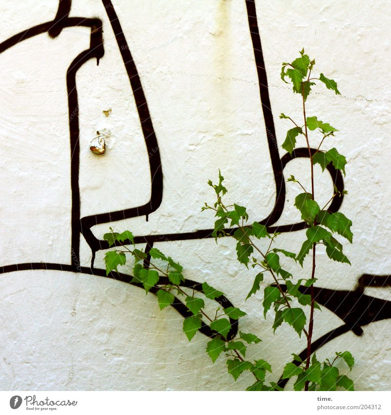 If you need more information ... Wall (building) Plaster Plant Graffiti Sign Drawing Leaf Green Tree Bushes Nature Culture Colour Black Line Exterior shot