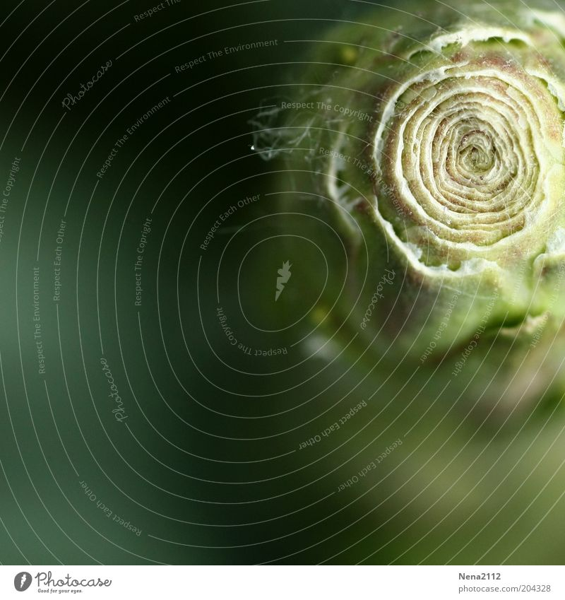 Nature Flower Green Plant Blossom Spring Circle Esthetic Round Exceptional Bud Macro (Extreme close-up) Palm tree Leaf bud Foliage plant Swirl