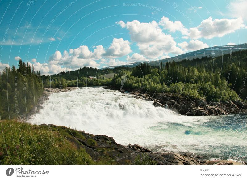 salmon migration Vacation & Travel Mountain Environment Nature Landscape Water Sky Clouds Summer Beautiful weather Meadow Forest Waterfall Exceptional Gigantic