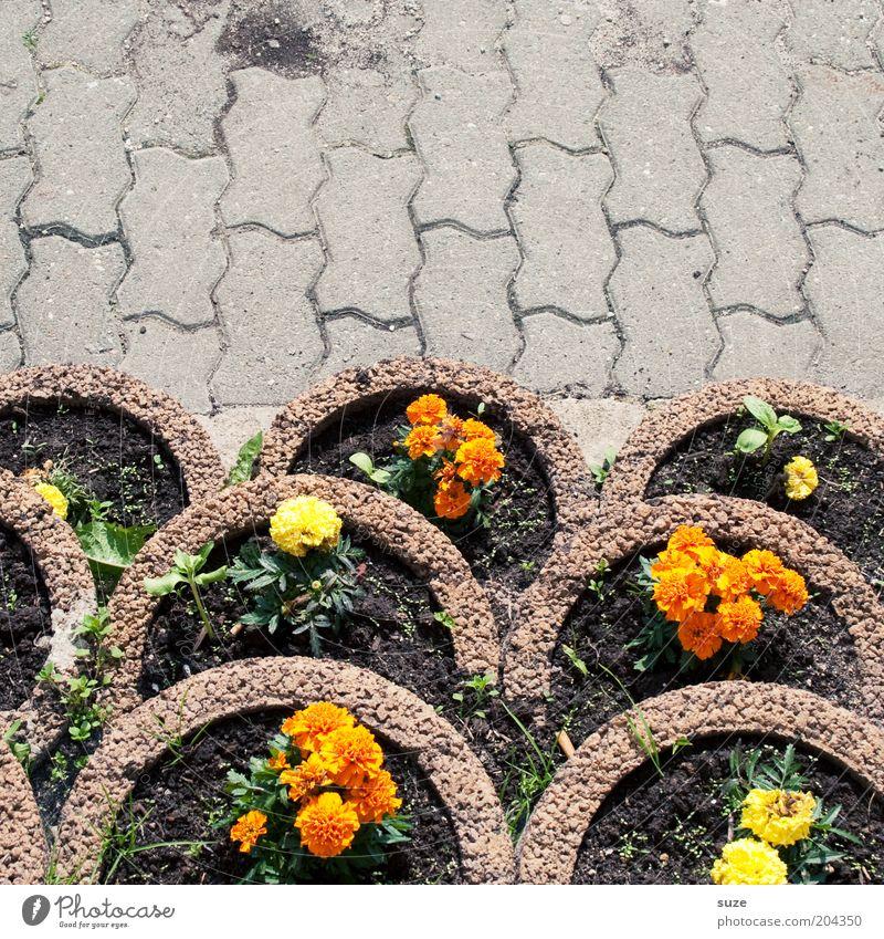 Flower Plant Blossom Garden Stone Lanes & trails Concrete Arrangement Growth Places Simple Decoration Blossoming Terrace Edge