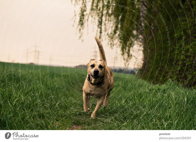 Nature Sky Tree Plant Summer Animal Meadow Grass Spring Dog Landscape Field Weather Walking Environment Running