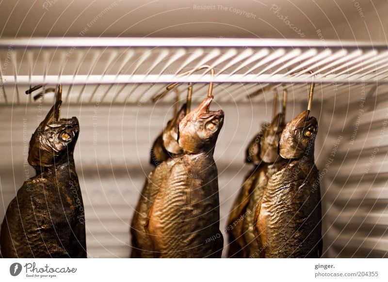 Smoked fish on sale Fish Nutrition Delicious Brown Gold Smoked trout Hang Cooling Icebox Checkmark Rust Fish head Fresh Fishery Grating Death Edible Kipper
