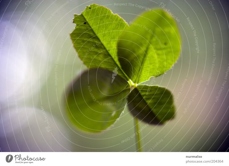 Nature Beautiful Plant Emotions Grass Happy Environment Hope Natural Sign Discover Beautiful weather Sustainability Clover Cloverleaf To dry up