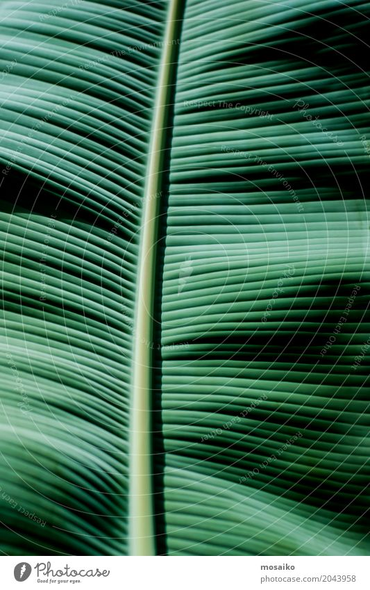 Graphics and Textures - Tropical feeling Nature Vacation & Travel Plant Summer Beautiful Leaf Calm Joy Lifestyle Healthy Style Art Fashion Design Line Elegant