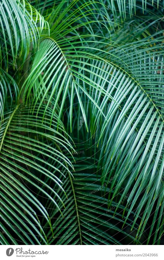 Graphics and Textures - Tropical feeling - Palm Leaf Nature Vacation & Travel Plant Summer Beautiful Tree Joy Environment Lifestyle Healthy Style Art Garden