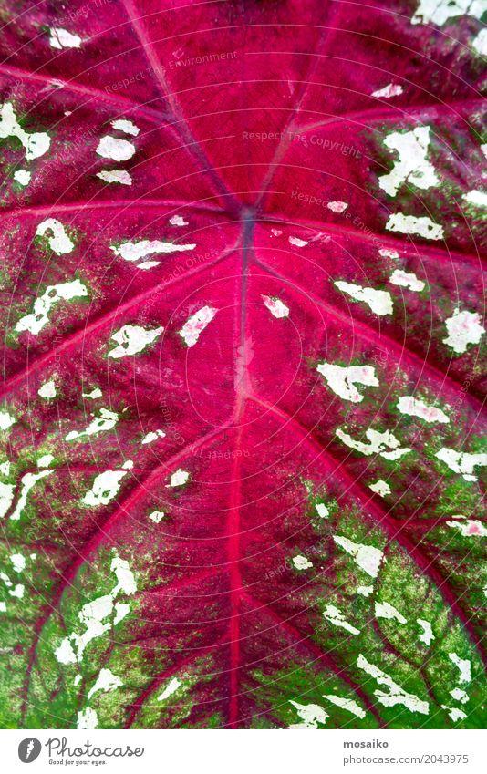 Textures of Tropical Plants Lifestyle Elegant Style Design Exotic Environment Nature Happiness Joie de vivre (Vitality) Uniqueness Inspiration Green Pink