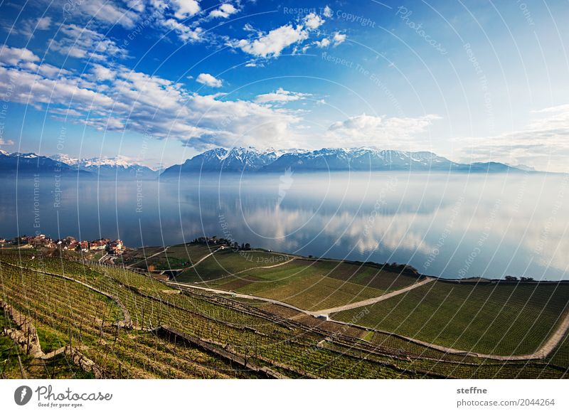 Nature IV Mountain Lakeside Infinity Lausanne Switzerland Alps Lake Geneva Lac Lemon Vineyard Wide angle Panorama (View) Mountain lake Colour photo