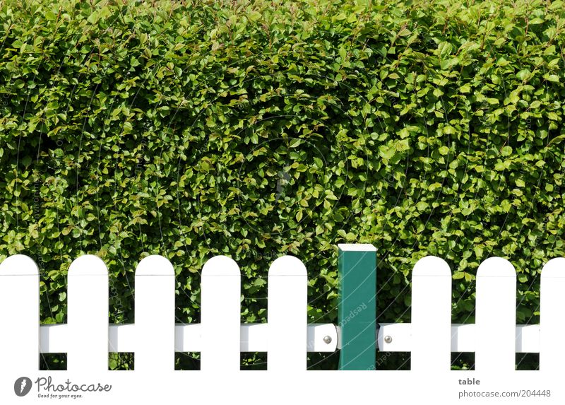 all slats on the fence Lifestyle Living or residing Garden Environment Nature Plant Spring Summer Beautiful weather Bushes Foliage plant Wood Metal Stand Growth