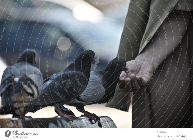 Human being Nature Man Blue Hand City Animal Gray Brown Arm Group of animals Wing 60 years and older Trust Male senior To feed