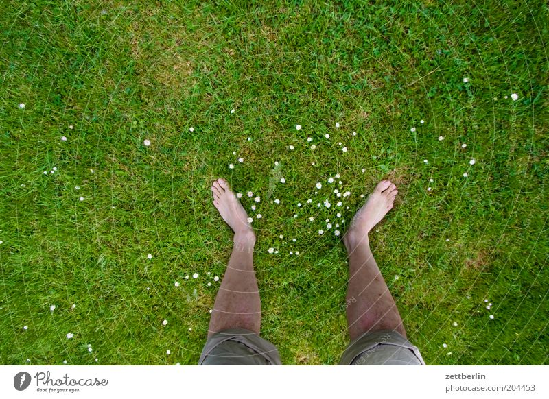 Plant Summer Meadow Grass Spring Legs Feet Growth Stand Lawn Human being Toes Barefoot Patient Site Unwavering