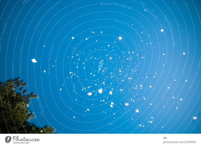 Blue Stars Star (Symbol) Point Things Symbols and metaphors Chaos Night Hover UFO Diffuse Flock Light Abstract Celestial bodies and the universe Galaxy