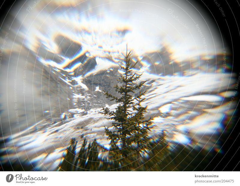 Nature Green White Tree Winter Environment Mountain Landscape Rock Circle Round Hill Alps Switzerland Christmas tree Fir tree
