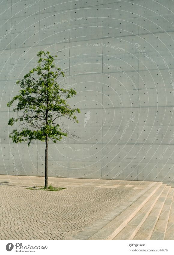 Tree City Plant Loneliness Wall (building) Gray Wall (barrier) Building Architecture Concrete Facade Perspective Stairs Modern Growth Simple