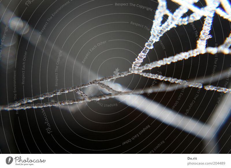 Nature Winter Dark Cold Gray Rain Ice Drops of water Network Frost Frozen Dew Bizarre Interlaced Delicate Spider's web