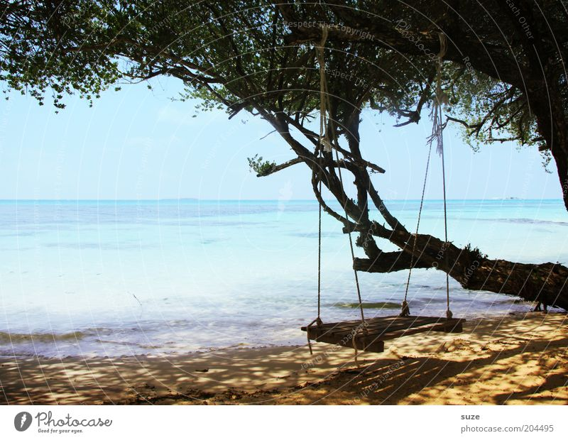Nature Tree Ocean Summer Beach Vacation & Travel Calm Loneliness Far-off places Relaxation Dream Sand Landscape Coast Time Horizon