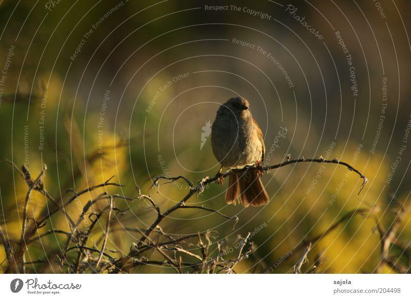 Nature Animal Moody Bird Wait Environment Sit Wild animal Dusk Forward