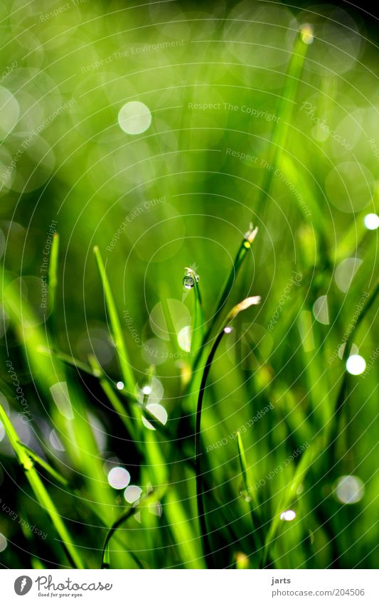 green day Environment Nature Drops of water Spring Summer Plant Grass Fresh Natural Green Dew Colour photo Exterior shot Close-up Detail Deserted Morning