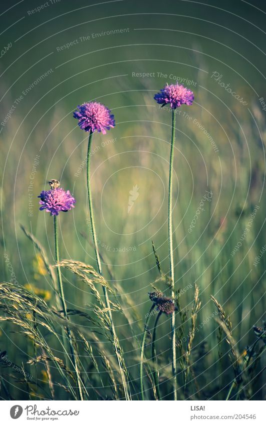 four of you Environment Nature Plant Earth Summer Flower Grass Blossom Foliage plant Wild plant Animal Wild animal Bee 1 Green Violet Pink Colour photo