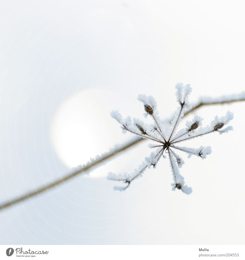 Nature White Plant Winter Colour Cold Snow Blossom Ice Moody Bright Environment Esthetic Frost Climate Pure