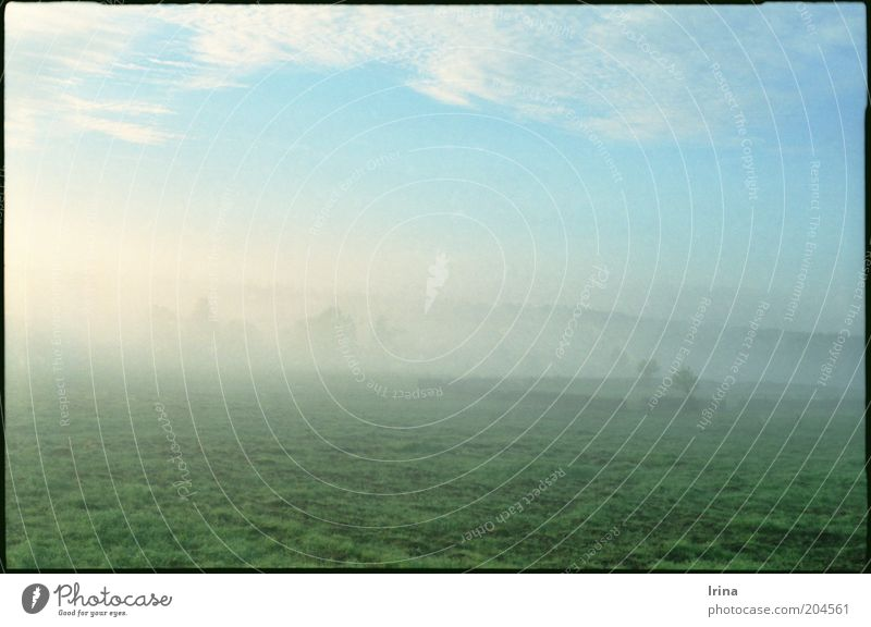 Nature Vacation & Travel Calm Landscape Meadow Travel photography Fog Infinity Pasture Haze National Park Poland Green space Fog bank Bialowieza