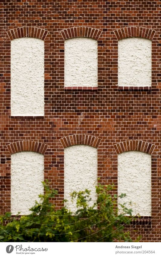 White Plant House (Residential Structure) Wall (building) Window Stone Wall (barrier) Building Brown Architecture Facade Gloomy Bushes Brick Insulation