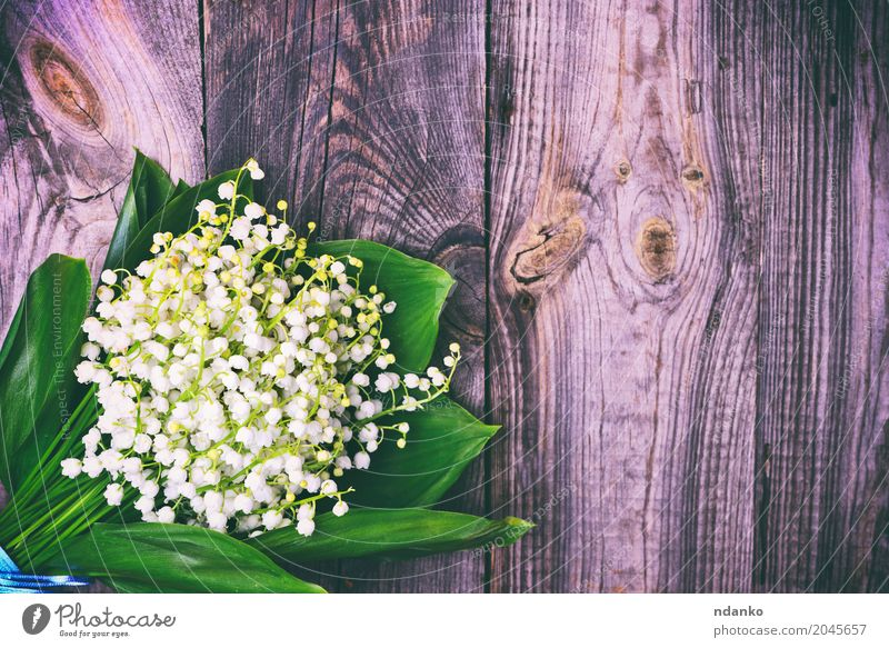 bouquet of white lilies of the valley Beautiful Nature Plant Flower Bouquet Wood Blossoming Bright Small Gray Green White Lily of the valley blooming spring