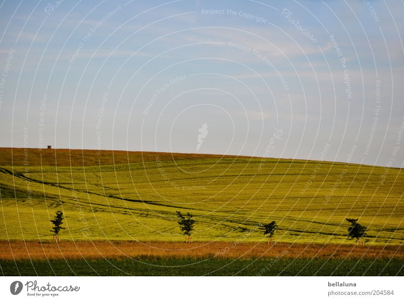 ... and it's summer! Environment Nature Landscape Plant Air Sky Clouds Horizon Sunlight Summer Climate Weather Beautiful weather Warmth Agricultural crop Field