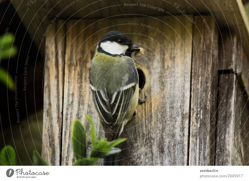 Tit without branch Tit mouse paridae Departure Landing Parental care Bird's eggs Parents Spring Feeding Garden House (Residential Structure) Nesting box