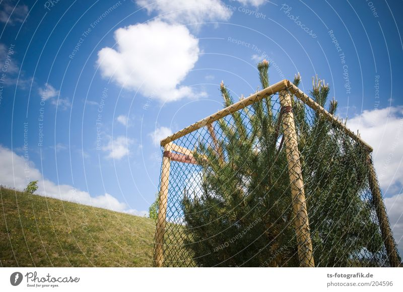 Christmas Tree Singleshaft Sky Clouds Beautiful weather Grass Coniferous trees Christmas tree Fir tree Spruce Fence Fence post Protective grid protective fence