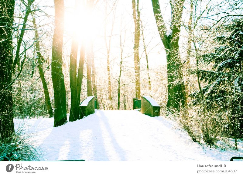 Nature White Sun Winter Snow Relaxation Park Bright Environment Bridge Footpath Beautiful weather Positive Bleak Promenade Leafless