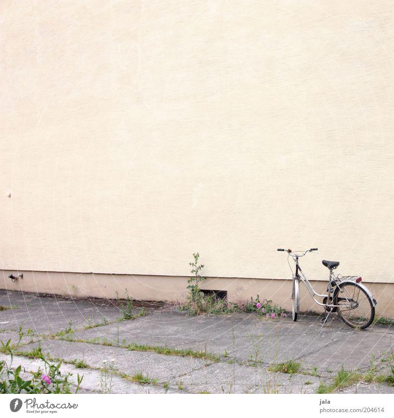Plant Yellow Wall (building) Gray Wall (barrier) Building Bicycle Facade Sidewalk Footpath Weed Kiddy bike