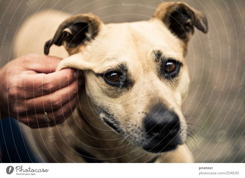 Hand Animal Playing Dog Contentment Animal face Leisure and hobbies Uniqueness Natural Exceptional Touch To hold on Cute Friendliness Relationship Positive