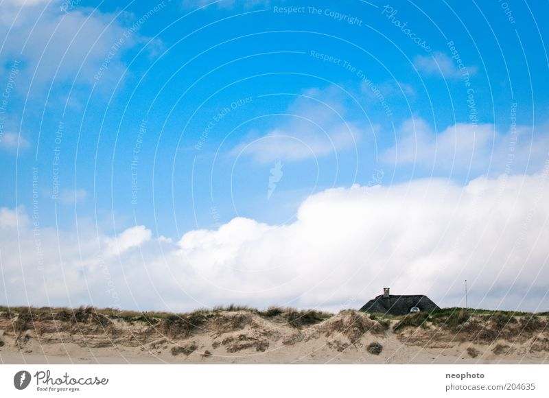 sea view Landscape Sky Clouds Grass marram grass Coast Beach Sand Blue Green Freedom Denmark Jutland Colour photo Exterior shot Deserted Day Sunlight