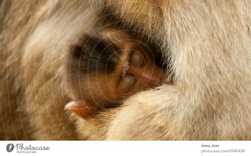 motherly love Animal Animal face Pelt Zoo Monkeys 2 Baby animal Animal family Emotions Moody Trust Safety Protection Safety (feeling of) Warm-heartedness