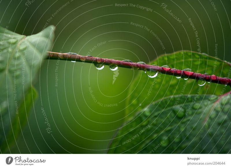 After The Rain Harmonious Relaxation Calm Summer Environment Nature Plant Water Drops of water Bad weather Bushes Leaf Foliage plant Wild plant Green Red