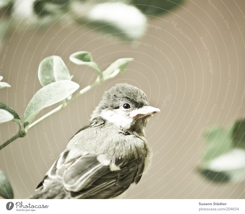Plant Loneliness Animal Bird Small Soft Animal face Wing Observe Wild animal Cuddly Crouch Baby animal